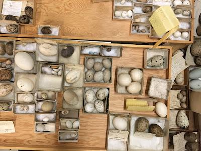 egg collection royal ontario museum