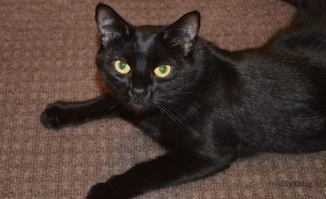 Very sleek black kitty