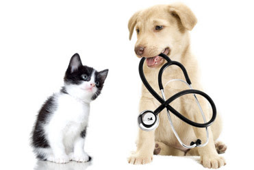 Is Pet Insurance Worth The Money?