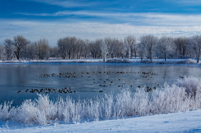 Winter Morning, Chatfield State Park