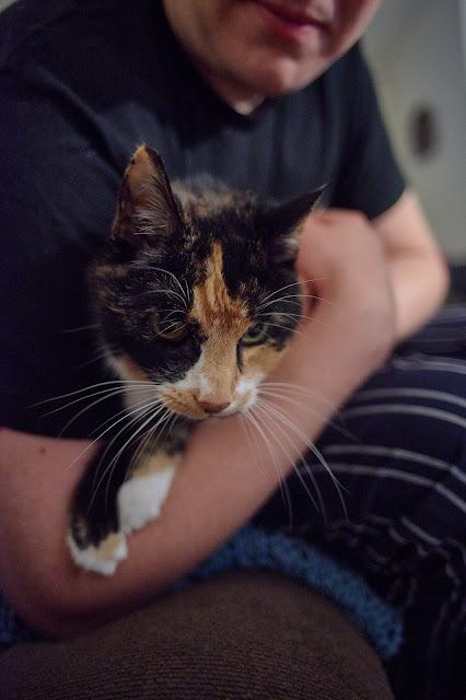 A portrait of a cat in a lap aka Love