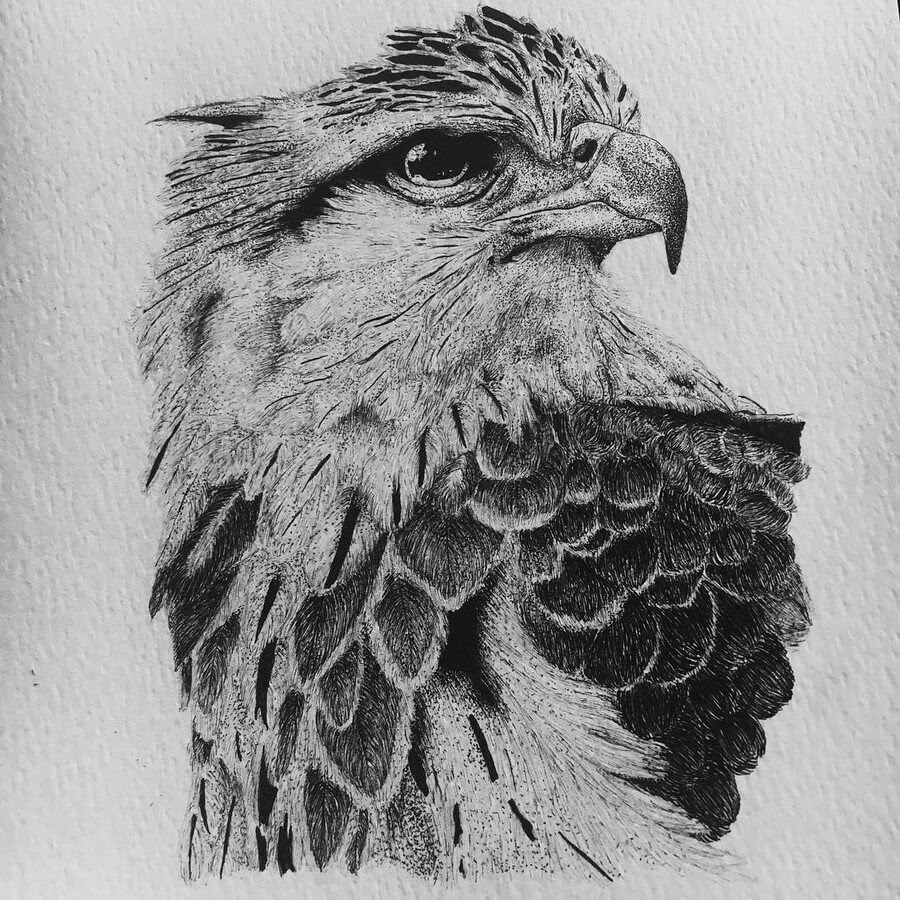 14-Grey-Eagle-Paige-Bates-Stippling-Drawings-www-designstack-co