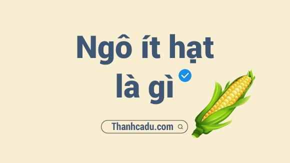 cac bo phan cua bap ngo,cac vung trong ngo chinh o viet nam,mot cay ngo co may bap,cay ngo ra nhieu bap,cau tao cua bap ngo,qua ngo,qua ngo hay bap ngo,phan au cua trai bap,Các bộ phận của bắp ngô,Các vùng trồng ngô chính ở Việt Nam,Một cây ngô có máy bắp,Cây ngô ra nhiều bắp,Cấu tạo của bắp ngô,Quả ngô