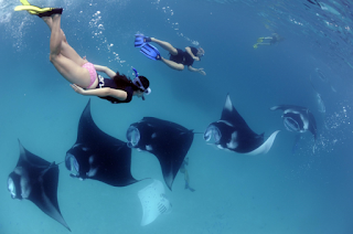 Diving in Manta Point