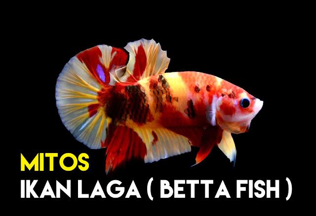 Mitos Salah Faham Tentang Ikan Betta