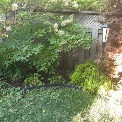 Toronto Dufferin Grove New Garden Makeover Before by Paul Jung Gardening Services--a Toronto Organic Gardener