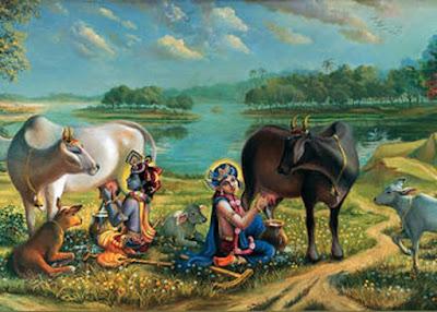 Krishna Balaram milking cows