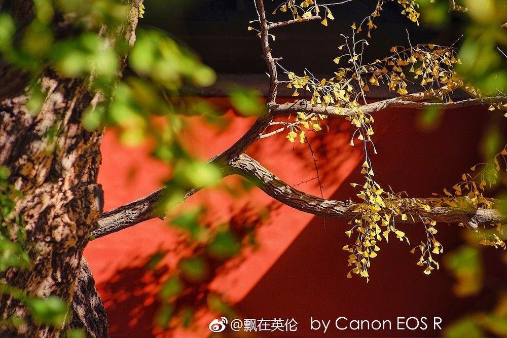 Дерево с желтыми и зелеными листьями