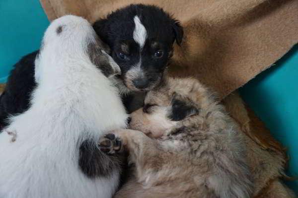 cachorros de tamaño mediano 2
