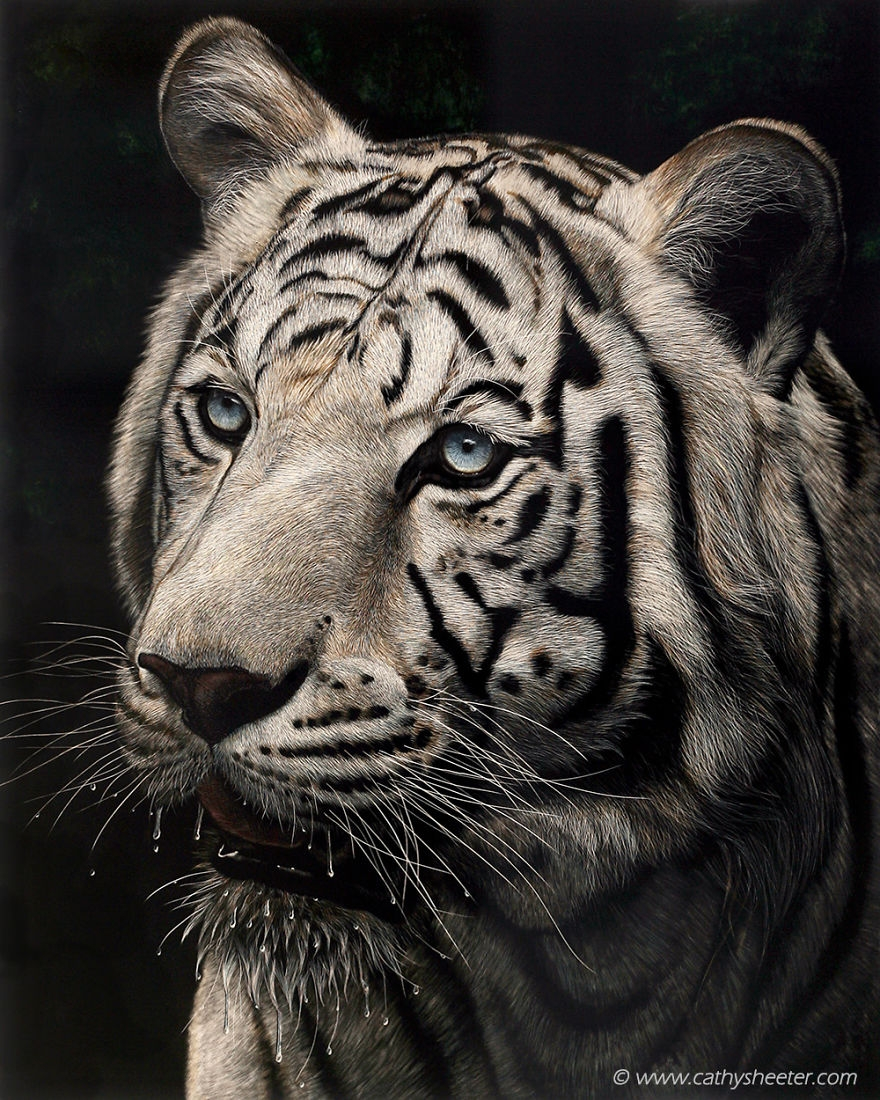 08-Tiger-Cathy-Sheeter-Hyper-Realistic-Scratchboard-Wild-Animal-Drawings-www-designstack-co