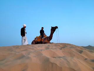 rajasthani camel wallpaper