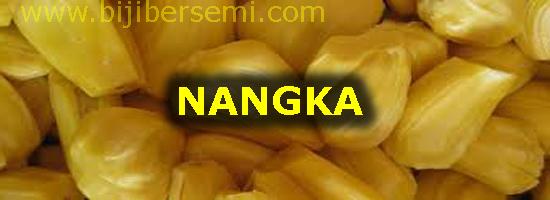 buah nangka, menanam nangka, cara menanam nangka