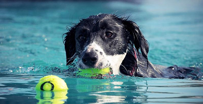 Vrai ou faux : Les chiens sont des nageurs hors-pairs !