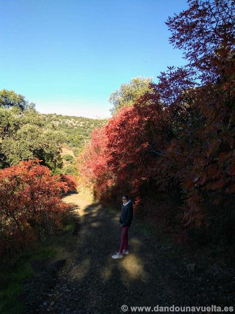 Árboles con un rojo intenso, en la ruta de senderismo de los castaños Parauta