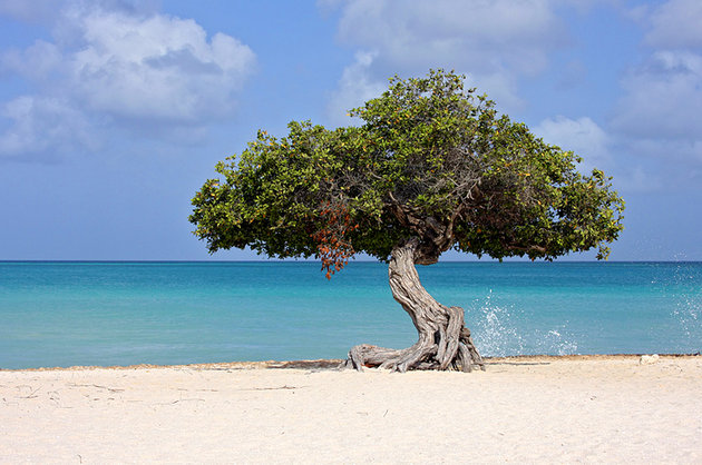 World Famous Car Wallpaper Tourist Attractions In Aruba Most Beautiful Places In