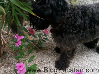 Perro en maya