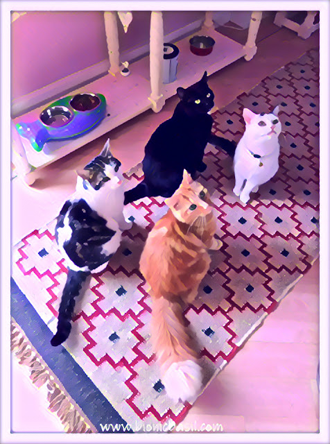 Treat Time with The B Team Boys ©BionicBasil® Caturday Art