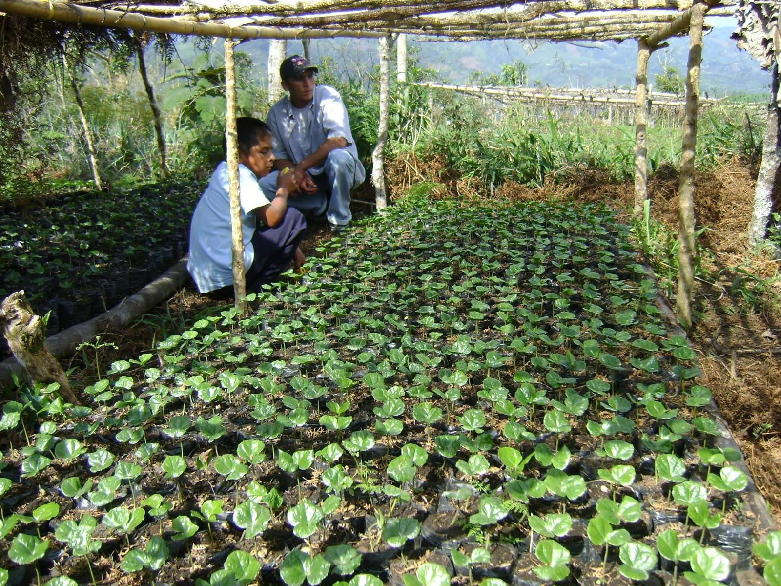 Ruta cafetera del huila turismo en el huila agencia de for Viveros en colombia