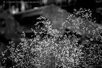 http://fineartfotografie.blogspot.de/2014/01/blumen-und-pflanzen-in-schwarzwei.html