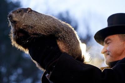 Η μαρμότα... The groundhog