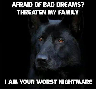 Funny dog pictures : I am your worst nightmare
