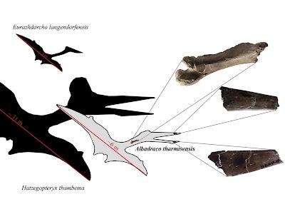 New Species 2020.Species New To Science Paleontology 2020 Albadraco