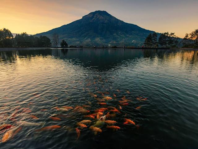 memberi makan ikan di wisata Embung Kledung