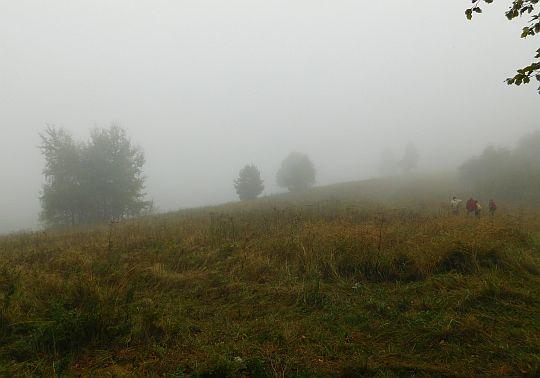 Przełęcz - tu kończy się las.