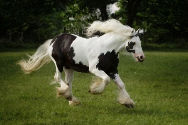 cheval-gitan