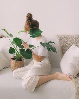 ➠ 10 tipos de plantitas de interior fáciles de mantener