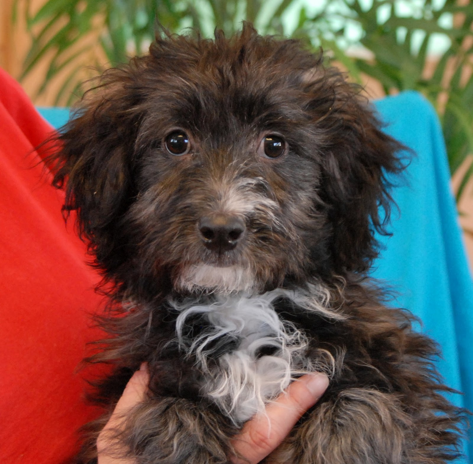 Nevada SPCA Animal Rescue: Do You Promise To Give Me Lots