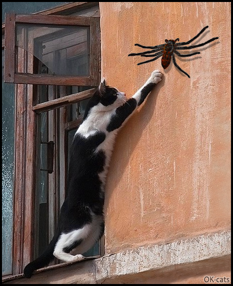 Photoshopped Cat Picture • OMG! My crazy fearless cat trying to catch a giant spider on the wall!