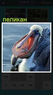 пеликан с открытым клювом в котором мелкая рыба лежит 23 уровень 667 слов