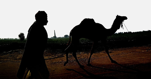 man with camel silhouette
