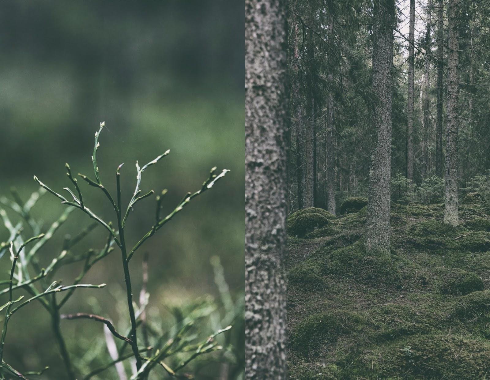 Hyvinkää, Terveysmetsä, luonto, luontopolku, nature, woods, metsä, metsäreitti, naturephotography, polku, valokuvaus, valokuvaaminen, Frida Steiner, Visualaddict, visualaddictfrida, luontovalokuvaus, this is Finland, Suomi, visit finland, mustikanvarpu