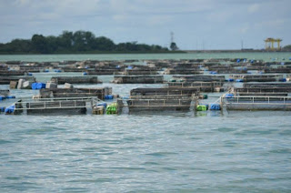 Médio Rio de Contas recebe projeto de piscicultura de R$ 500 mil