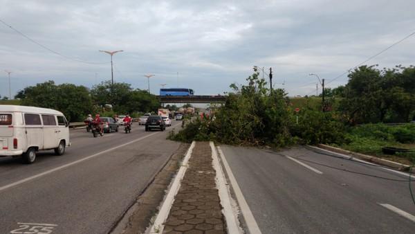 Chuva com ventos de 42 km/h derruba árvores, portão de condomínio e deixa bairros sem energia em Fortaleza