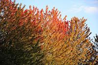 por que as folhas mudam de cor no outono
