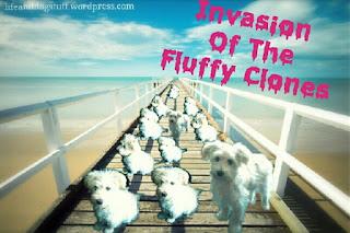 Fluffy clones