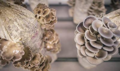 Mushroom cultivation training in salem