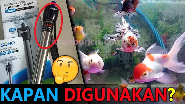 Kapan Waktu yang Tepat Menggunakan Water Heater pada Aquarium Ikan Mas Koki?