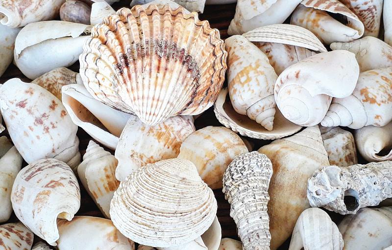 Vacation Sea Shell Garland