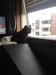 cães observando pela janela