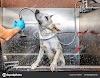 ¿Cuándo bañar a un perro?