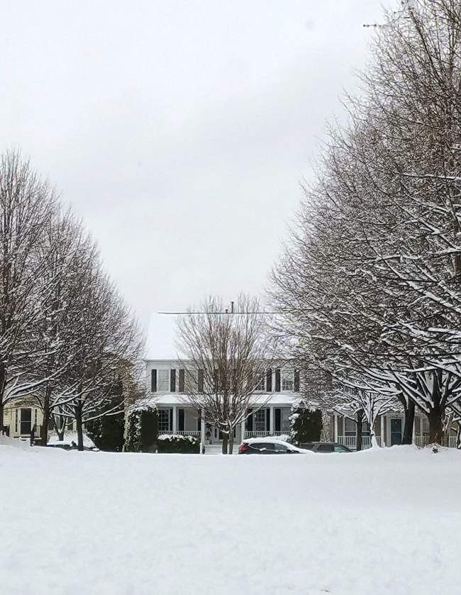 trees and houses covered in snow.