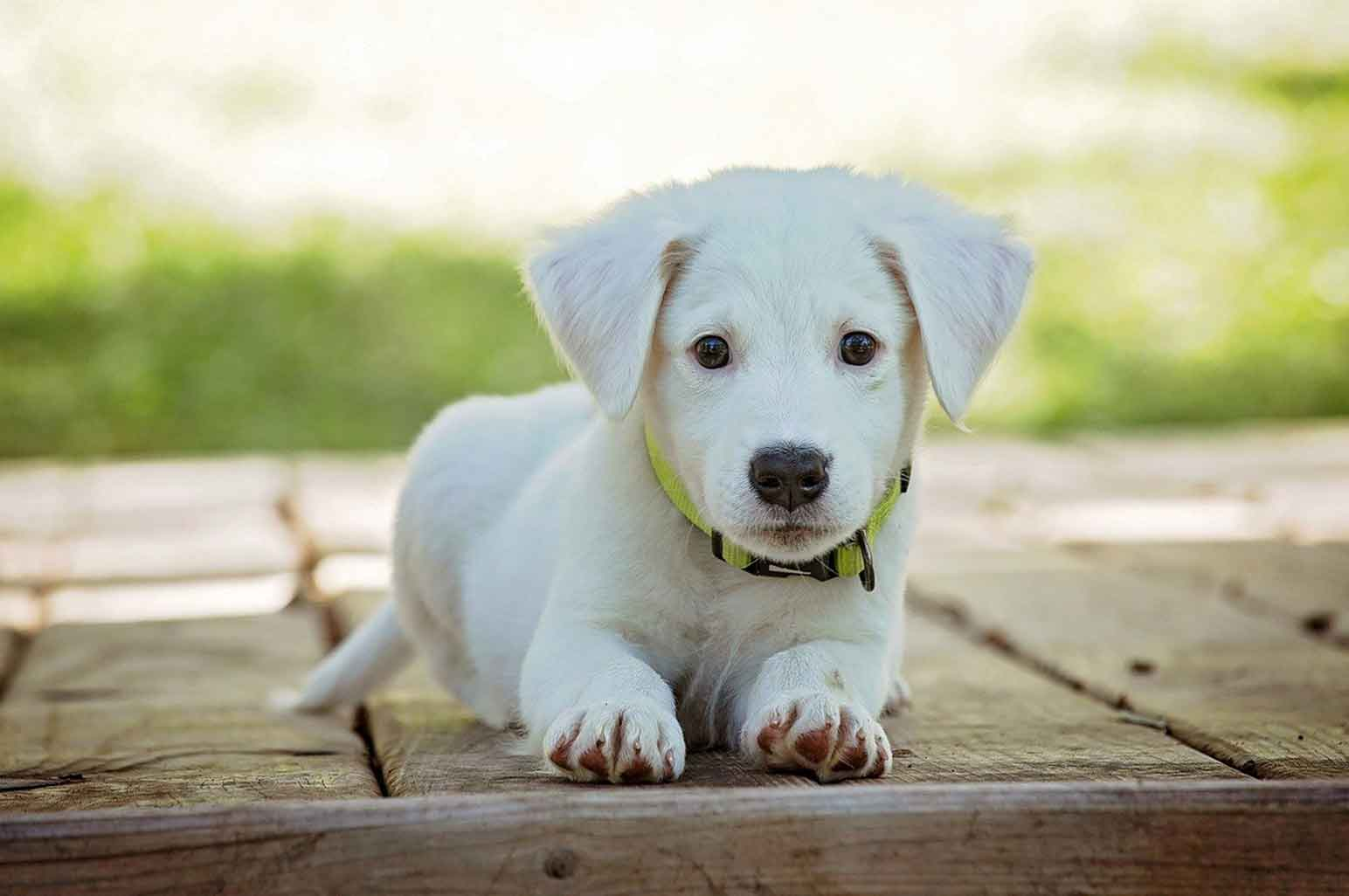 How to Know if Your Puppy is Healthy