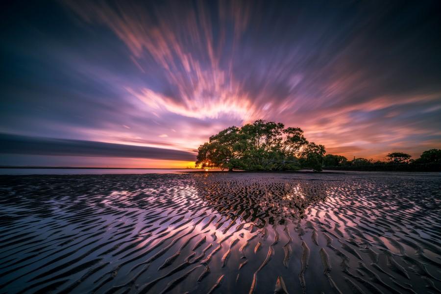 Royalty free, pubblico dominio, immagini gratis, albero, tramonto