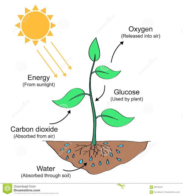 Cara tumbuhan mendapatkan makanan