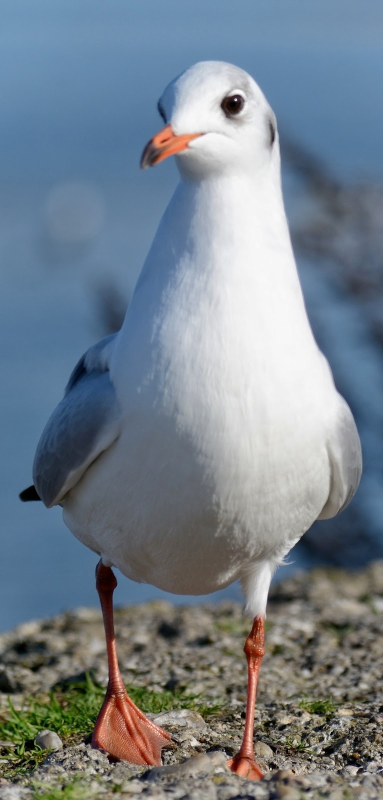 Up close photo of the gull butterwort bird.