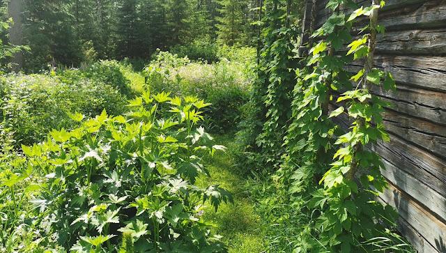Suomen kaunis luonto